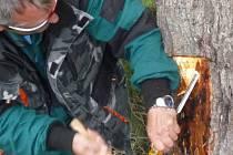 Zmutovaný parazit zaútočil na olše okolo bruntálského Černého potoka. Musel přijít zákrok odborníka z rostlinolékařské inspekce.