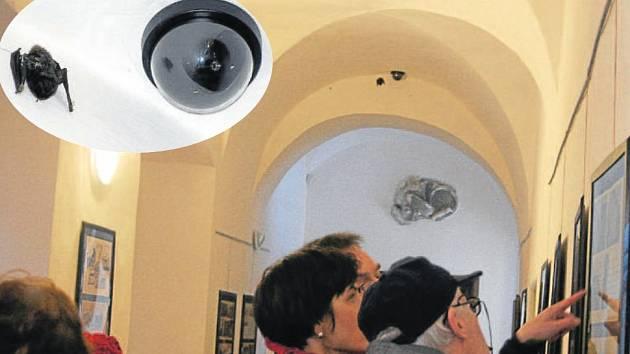 Netopýra zazimovaného na chodbě zámku ve Slezských Rudolticích návštěvníci neprobudili.