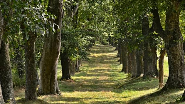 Andělská hora je proslulá poutní cestou ke kostelu sv. Anny na Annabergu. Lemuje ji nádherná klenová a lipová alej z celkem 257 vzrostlých stromů, zachovalá a nijak viditelně nepoškozená.