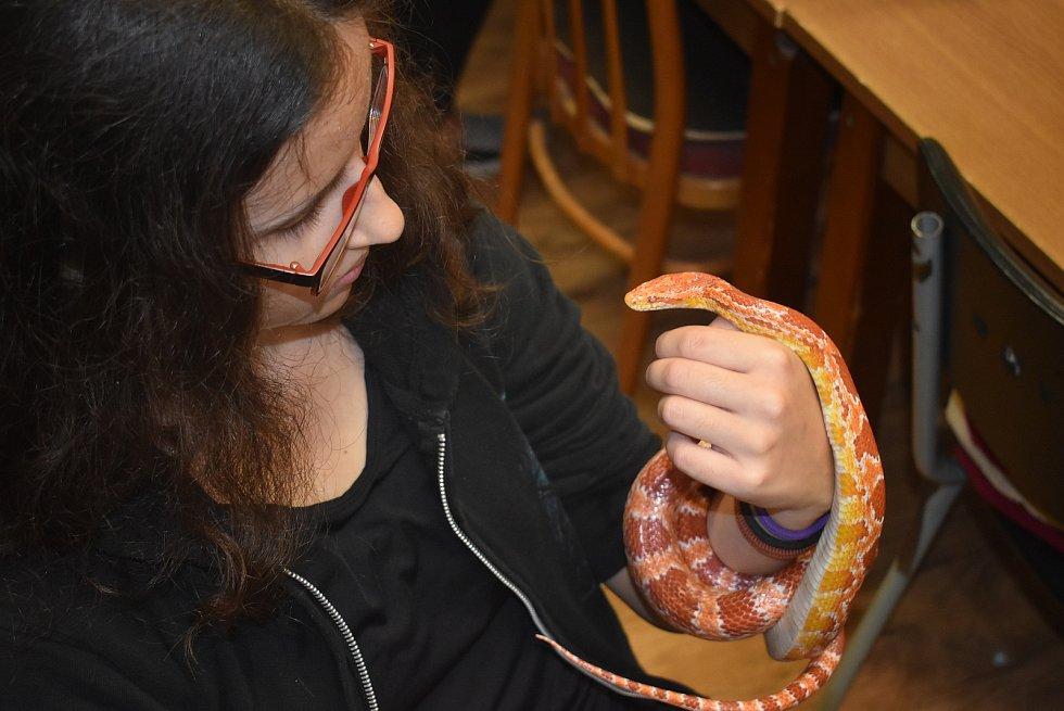Terarista Tomáš Báča naučil děti nebát se hadů, pavouků a štírů.