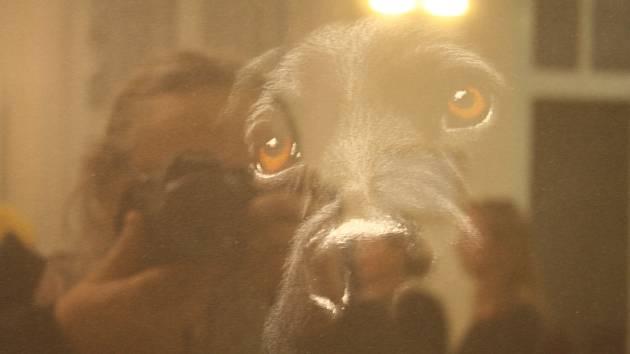 Vladimíra Gajdošová kresbu nikdy nestudovala, a přesto její techniku obdivují laici i výtvarní pedagogové. Dokáže nakreslit černého psa na černém pozadí, bublinu i realistické portréty plné emocí a grimas.
