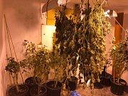Cizinec měl v domě marihuanu za zhruba dva miliony.