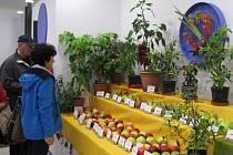 Po loňském vítězství v podzimní etapě výstavy Flora Olomouc bruntálští pěstitelé a aranžéři dosáhli letos druhého místa za nejlepší expozici a čestného uznání za kolekci paprik.