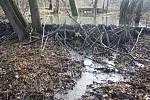 Na přelomu let 2018 a 2019 bobři dokončili druhý stupeň kaskády v řece Lužná a uvedli ho do provozu. Zvýšili tím hloubku vody asi o metr a vodní tok se také trojnásobně rozšířil.