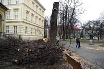 Sedm stromů ve Smetanových Sadech v Krnově šlo v těchto dnech k zemi.