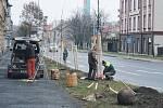 Výsadba zeleně v Krnově.