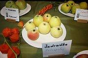 STARÉ ODRŮDY ovoce, jako jsou jadernička nebo kdoule, v žádném obchodě nekoupíte.