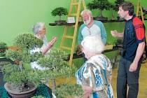 Skalničky a bonsaje byly námětem debaty mezi vystavovatelem Miroslavem Sedlaříkem (zcela vpravo) a dlouholetými členkami Klubu skalničkářů Campanula Bruntál Marií Zapalačovou ze Světlé Hory, Marií Ruskovou z Krnova a předsedou klubu Pavlem Hejskem.