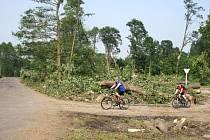 Do lesů na Ježníku už se smí. Lidé zde ale musí dávat pozor, ještě se zde najdou stromy, které mohou být nebezpečné.