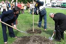 Vysazení nových stromů přátelství bylo v teplém počasí docela náročné. Nejvíce práce připadlo na starostku Krnova Renatu Ramazanovou, která pomáhala svým protějškům zasadit všechny tři stromy.