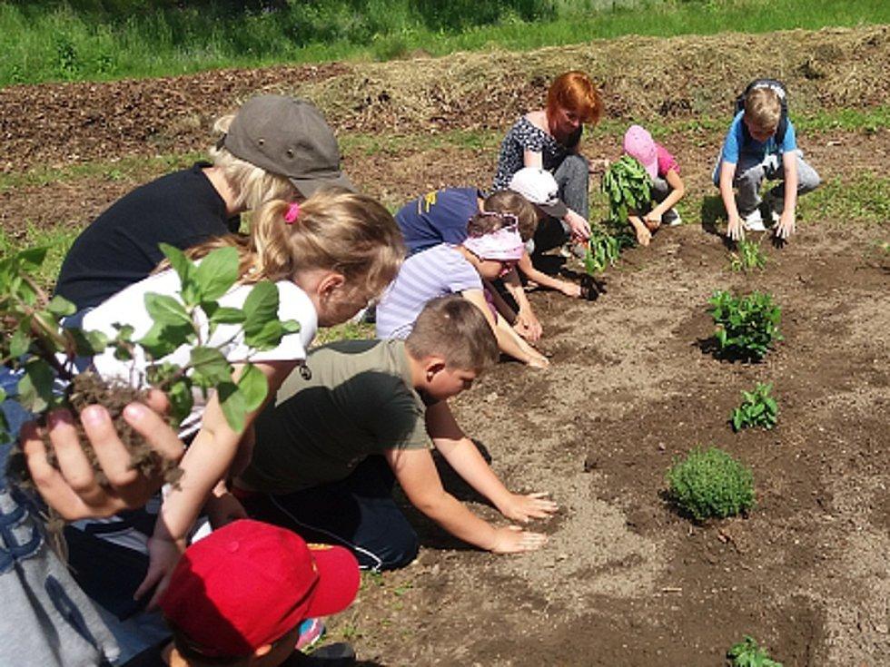 Alena Křištofová by ráda vrátila zahradničení do zámeckého parku ve Městě Albrechticích. Vysvětluje dětem, jak na to, když si chtějí vypěstovat vlastní bylinky nebo zeleninu.