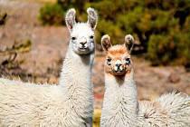 Na cestě po Chile pořídili cestovatelé mnoho působivých fotografií.