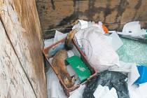 Lišky ztrácí plachost a hledají potravu i ve městech. Takto dopadla liška, která se vydala do Bruntálu. Pracovník sběrného dvora v Polní ulici ji našel v hlubokém kontejneru, ze kterého už nemohla ven. Podobných setkání s liškou přibývá.