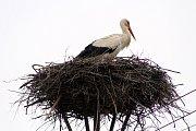 Hnízdo čápa bílého. Ilustrační foto.