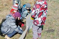 Žáci základní školy v Malé Morávce stavějí žábám záchranné fóliové zábrany.
