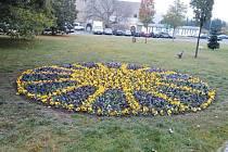 Macešky na náměstí Minoritů přinesly do této lokality modrou a žlutou barvu.