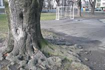 Otevřené hřiště je projekt, jehož cílem je zvelebit toto školní hřiště na Dvořákově okruhu. V současnosti asfaltový plácek nemá moc co nabídnout a zároveň je na konci své životnosti, takže ke hrám neláká.