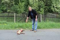 Vojtěch Rozehnal po opakovaných útocích lišky na svou drůbež hledal pomoc u myslivců, na policii i na městském úřadě. Nakonec včera ráno drzou lišku přejel neznámý řidič hned za plotem jeho zahrady.