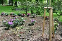 Nová zeleň v městském parku v Bruntále se stává terčem zlodějů, kteří si zdarma odnáší keře zřejmě na své vlastní zahrádky.