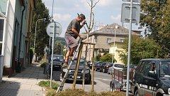 Výsadba více než sta stromů a dvě stě padesáti keřů postupně proběhne na krnovském Sídlišti pod Cvilínem SPC a také v Sovově ulici. Výsadbu zajišťuje Povodí Odry jako náhradu za zeleň vykácenou kolem řeky Opavy.