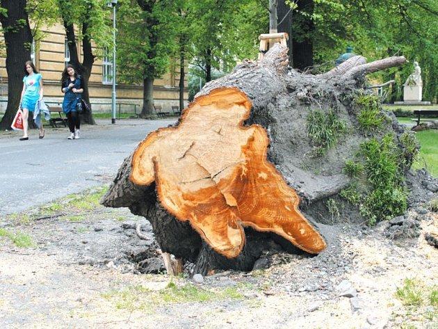 Smetanovy sady pro zvýšení bezpečnosti chodců bude ještě letos čekat zajímavá akce: tahová zkouška u starých stromů podél komunikace pro pěší. V minulosti zde došlo k několika vývratům.