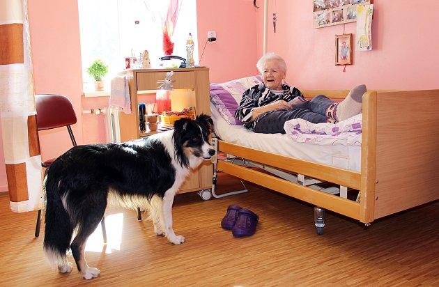 Pes Merlin se stal miláčkem pacientů v Rýmařově. Těm, kteří byli zvyklý na přítomnost domácího mazlíčka, Merlin nahrazuje pocit domova.