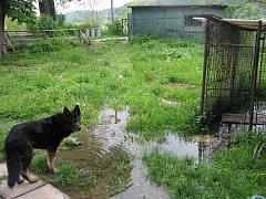 Silný déšť provázený vichřicí a povodněmi není stresující jen pro lidi, ale také pro zvířata. Na Krnovsku se množí vyplavené kotce, kurníky a chlívky.