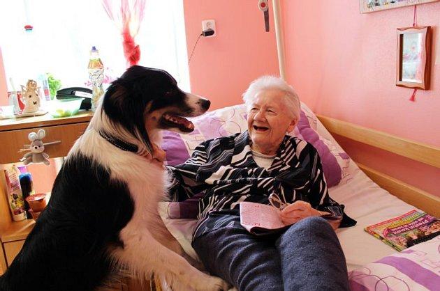Pes Merlin se stal miláčkem pacientů vRýmařově. Těm, kteří byli zvyklý na přítomnost domácího mazlíčka, Merlin nahrazuje pocit domova.