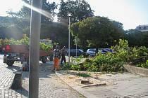 Na proschlý strom před krnovskou poliklinikou se dřevorubci vrhli už po 6. hodině ranní.