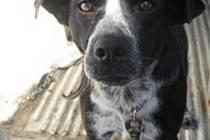 Psí útulek ve Slezských Pavlovicích představuje dalšího psího nalezence, který se nedočkal svého dosavadního pána a stal se z něj čekatel na adopci u hodných lidí.