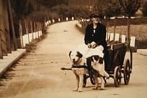 Zvětšenina sto let staré fotky obloukového mostu v Branticích přinesla překvapení. Ani historik Alexandr Michl Bernard netušil, že pes v našem regionu býval tažné zvíře.