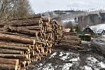 V lesích kolem Holčovic ještě zůstala spousta kůrovcového dřeva. Těžaři ho odváží po úzkých silničkách.