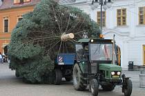 Nezválek bylo jméno loňského vánočního stromu v Bruntále. Dostal jméno podle Nezvalovy ulice, kde více než třicet let rostl. Také letos v soutěži budou místní obyvatelé hledat jméno vánočního stromu.