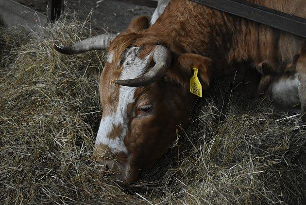 Hovězí zfarmy vJindřichově ve Slezsku není určeno pro obchodní řetězce. Farmářka Andy Franková ho rozváží přímo koncovým zákazníkům.