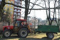 Plánování ořezu se účastnili kvůli nedalekému Černému potoku také pracovníci státního podniku Povodí Odry.