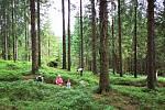 Lesní slavnost Lapků z Drakova vznikla před patnácti lety, aby připomenula tradici hutnictví a zpracování železa v Jeseníkách.