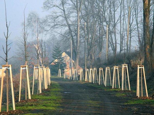 Ježnická alej patří k zeleným dominantám Krnova. Část lip zničilo tornádo, část stavebníci, kteří svévolně vedli výkopy přes kořeny. Letos obnova aleje pokračuje výsadbou deset lip malolistých.