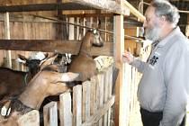 Ivan Němeček na hornobenešovské farmě u svých koz, které dávají zdravé mléko, sýry, máslo i jogurty.