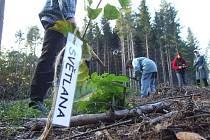 Kampaň Krnov – město stromů byla zahájena 23. října.