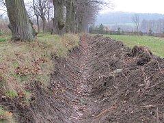 Příkop přes kořeny stoletých lip vyhloubil stavebník bez povolení a nevratně tím poškodil tento úsek ježnické aleje.