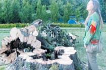 Zámecká zahrada ve Slezských Rudolticích při pátečním větru přišla o majestátný habr s křivolakým kmenem a velkou romantickou dutinou. Škody byly odklizené dřív, než se začali sjíždět hosté na víkendovou vernisáž.