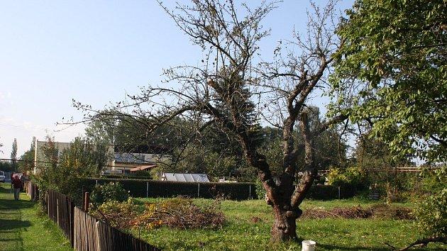 Krnovské zahrádkářské kolonie, ilustrační foto