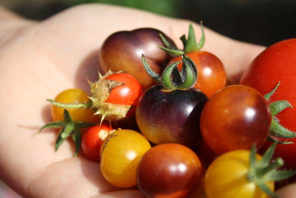 Park albrechtického zámku letos poprvé oživily bylinkové a zeleninové záhony. Alena Křištofová zde návštěvníkům vysvětluje, jaké podoby mohou mít  rajčata. Údiv vyvolávají pichlavá liči rajčata plná ostnů i černé a fialové odrůdy,