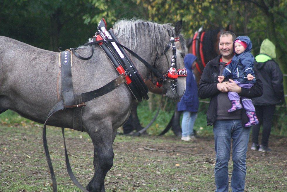 Svod tažných koní ve Městě Albrechticích.