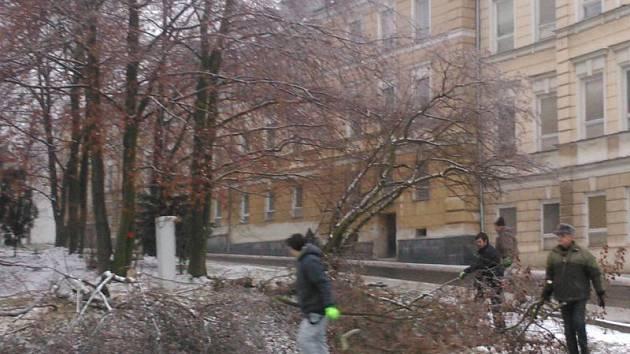 Technické služby ořezávají porosty do osmdesáti centimetrů výšky v lokalitě ulic Revoluční a Partyzánská v Bruntále.
