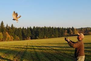 Dvě třetiny zraněných ptáků vypouštějí po vyléčení zpět do přírody.