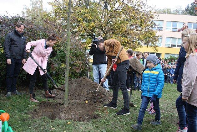 LÍPA vysazená před krnovskou školou vŽižkově ulici je jedním zmnoha stromů republiky, které nám budou připomínat oslavy 100výročí vzniku Československa.