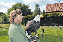 Sokolník Petr Svoboda si pro samici orla bělohavého Wamditangu došel do Flemmichovy vily, kde na něj čekala. V naprostém klidu se pak nechala zblízka okukovat od zvídavých dětí.