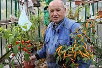Milan Janošík a jeho bruntálské feferonkové království. Po jeho pravé ruce roste vůbec nejostřejší paprika světa, v ruce třímá vlastní vyšlechtěný druh B1.