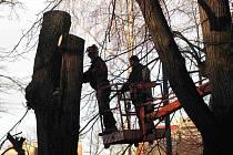 Vysoké stromy jsou káceny ořezáváním z plošiny. Ilustrační foto.